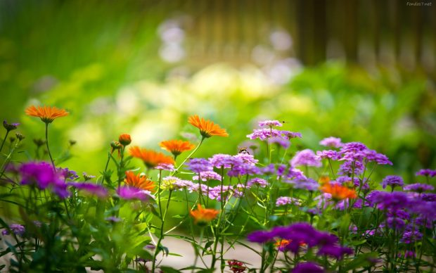 el jardinero de grian