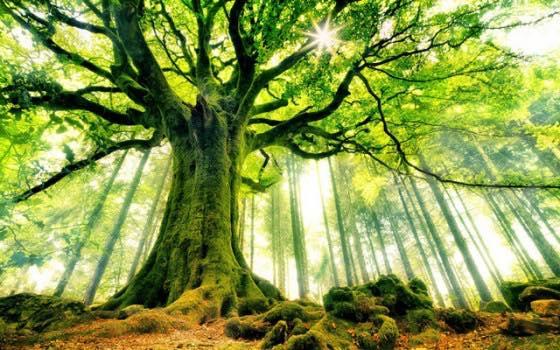 Saca provecho de la terapia de la naturaleza para curar y hacer más amplia tu conciencia 1