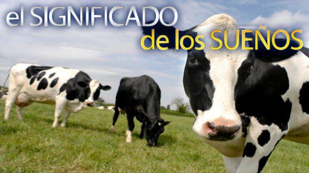 Soñar con vacas gordas