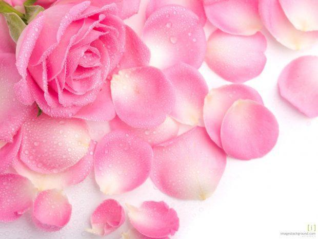 rosas - rosas