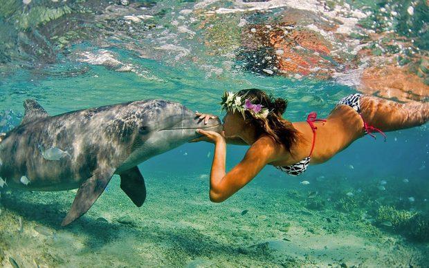 aloha - Descubre Tu Propio Paraíso