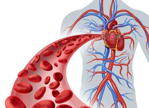 Circulación-de-la-sangre
