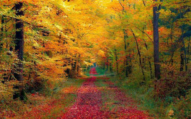 hd-wallpaper-autumn-landscape-dekstop-wallpaper-autumn-forest-wallpapers-34810-1920x1200-1920x1200-autumn-forest-desktop-pc-and-mac-wallpaper