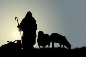 pastor con Cabras