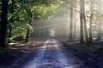 hermandadblanca org camino 620×413.jpg - ¿Cómo alcanzar mi propósito? - hermandadblanca.org