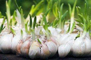 Propiedades curativas de las Especias y Hierbas Aromáticas