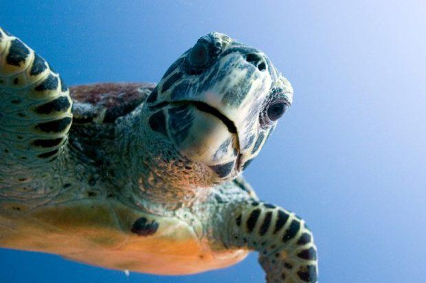 tortuga-marina