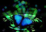 hermandadblanca org butterfly 492536 1920 620×438.jpg - Permitir ser, cuando quiero cambiar a otro - hermandadblanca.org