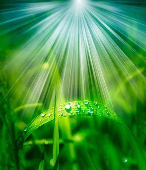 El quinto rayo verde