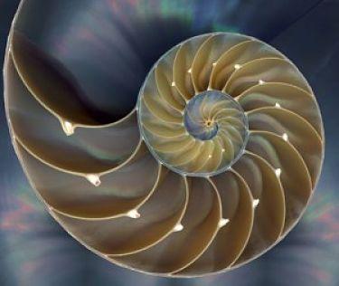 Espirales de la geometría sagrada