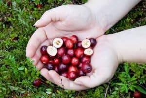 El arándano rojo: algunas propiedades y usos mas comunes