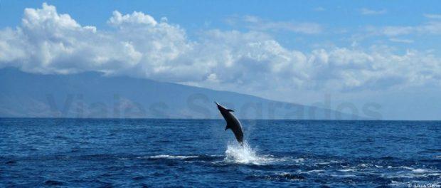 20160713_viajessagrados_hawaii_delfin