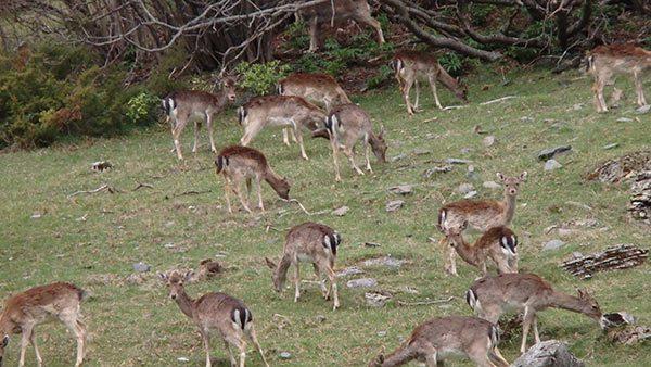 20160721_reikiychamanismo_com_ciervos_naturaleza_montana_campo_animales