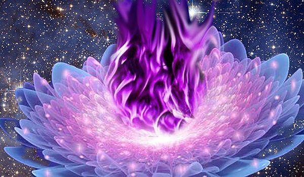 llama violeta saint germain