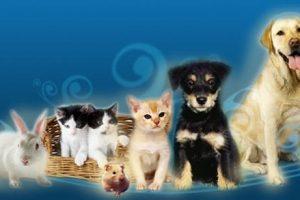 La práctica de la Liberación de Animales