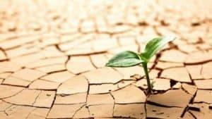Resiliencia, 7 claves para que tu hijo ¡salga adelante! Rosa Barocio