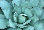 hermandadblanca org beneficios del aloe vera descubre sus propiedades 620×416.jpg - Descubre los beneficios del aloe vera en el cuerpo humano - hermandadblanca.org