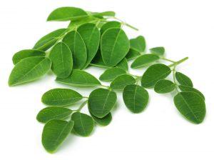 Moringa leaves over white background