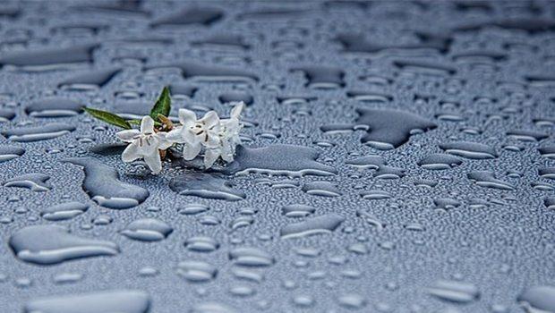 7 rituales de primavera para atraer buena suerte y energía 1