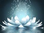 hermandadblanca org flor de loto abierta karina zarfino 620×465.jpg - Depresión o Despertar Por Karina Zarfino, desde Planeta Yo Soy - hermandadblanca.org