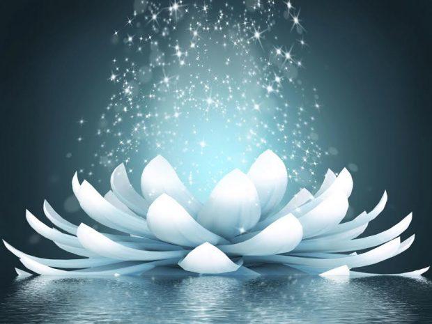 flor-de-loto-abierta-karina-zarfino