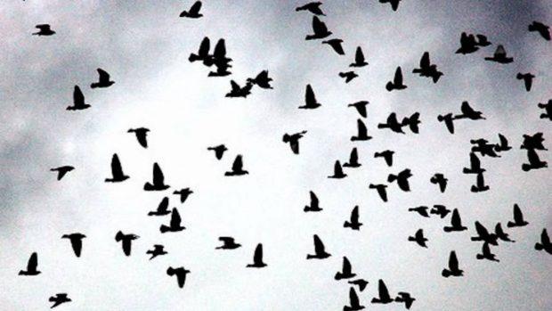 pajaros volando esfuerzo - A la mierda el esfuerzo - hermandadblanca.org