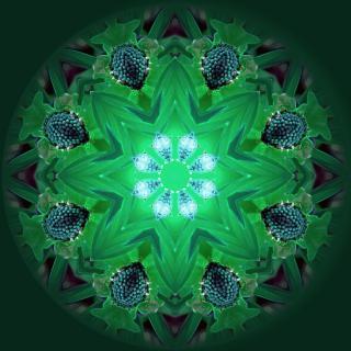 ofrenda-de-guia-espiritual-aprovechemos-la-luz