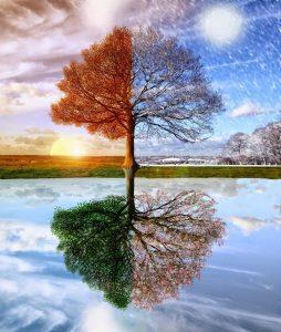 20161228 kikio327154 id120266 ciclos energeticos como aprovechar las energias positivas de gaia de fin de ano a tu favor 3ciclosestacionarios - Ciclos energéticos: Cómo aprovechar las energías positivas de Gaia de fin de año a tu favor - hermandadblanca.org