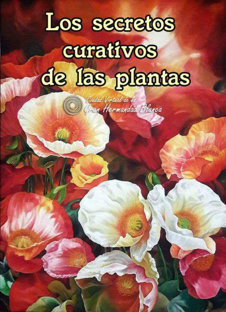 Los secretos curativos de las plantas.