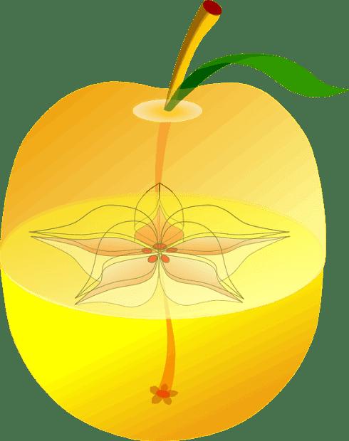 20170221 paedomabdil23593 id122726 guarda la manzana un pentagrama magico en su corazon Guarda la manzana un pentagrama mágico en su corazón 2 - ¿Guarda la manzana un pentagrama mágico en su corazón? - hermandadblanca.org