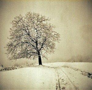 20170228 rosa id122946 el tao del colgado de la muerte arbol en un camino de nieve - El Tao:  del Colgado, de la Muerte - hermandadblanca.org