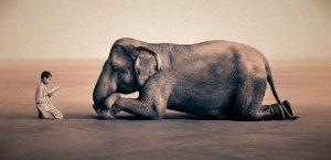 20170228 rosa id122946 el tao del colgado de la muerte elefante y niño reverencia - El Tao:  del Colgado, de la Muerte - hermandadblanca.org