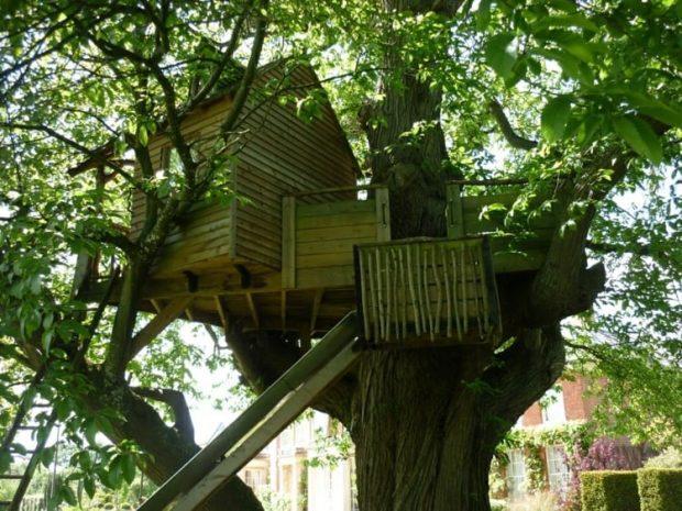 20170320 pilarmktvaz2984773 id123771 reviviendo a la casa del arbol arb2 - Reviviendo a la casa del árbol - hermandadblanca.org