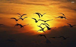 20170324 ricard251 id123815 950936 Bandada de aves volando - Las 7 Dimensiones de Conciencia - hermandadblanca.org