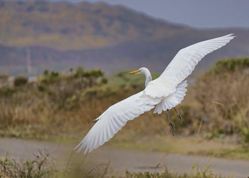 20170331 suonidiluce253 id124162 cicogna bianca in volo - Cómo vivir la Vida - hermandadblanca.org