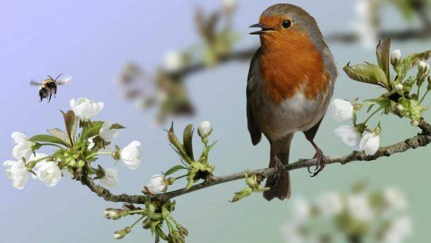 20170504 willyhern39164 id125490 cuida y fortalece tu espiritualidad escucha el canto de ese pájaro - ¿Has escuchado el canto de ese pájaro? Cuida y Fortalece tu Espiritualidad - hermandadblanca.org