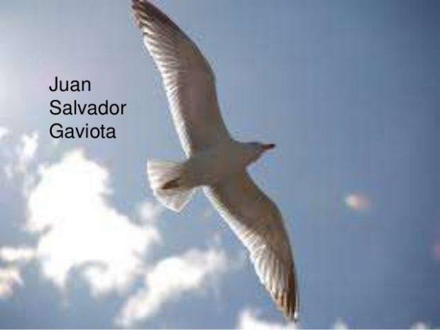 20170505 kikio327154 id125556 imagen 1 - Juan Salvador Gaviota. Un libro que no puede faltar en tu colección. - hermandadblanca.org