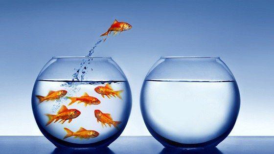 goldfish jumping out of the water - Libertad y educación en la perspectiva de Krishnamurti. 1° Parte: Los impedimentos de la libertad - hermandadblanca.org