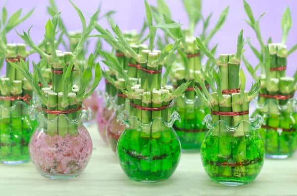 10 hierbas para atraer energ a positiva - Plantas para atraer el dinero ...