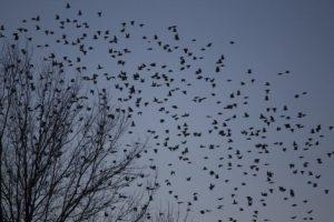 Pensamiento Zen: Pájaros en el cielo