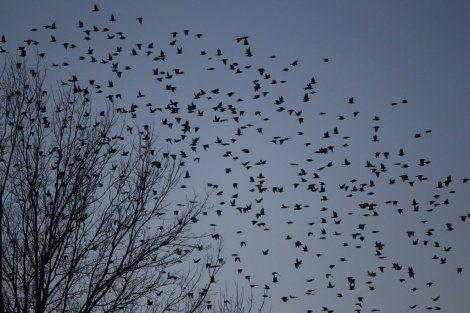 20170520 gonzevagonz23596 id125971 pájaros en el cielo - Pensamiento Zen: Pájaros en el cielo - hermandadblanca.org