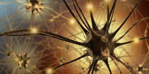 20170520 willyhern39164 id125941 Desde tu Cerebro Cómo se Origina la Espiritualidad Humana - Desde tu Cerebro ¿Cómo se Origina la Espiritualidad Humana? - hermandadblanca.org