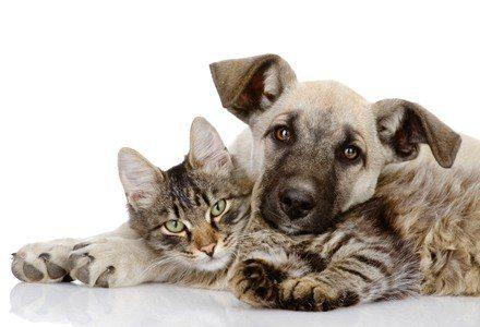20170530 kikio327154 id126438 imagen 5 - Animales. Las valiosas lecciones que pueden enseñarnos. - hermandadblanca.org