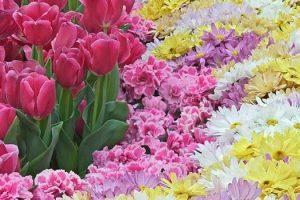Flores y plantas para cada signo