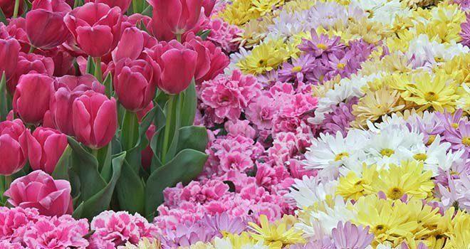 20170606 odette289135 id126669 Imagen 1 - Flores y plantas para cada signo - hermandadblanca.org