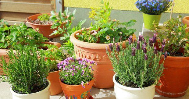 20170606 odette289135 id126669 imagen 2 - Flores y plantas para cada signo - hermandadblanca.org
