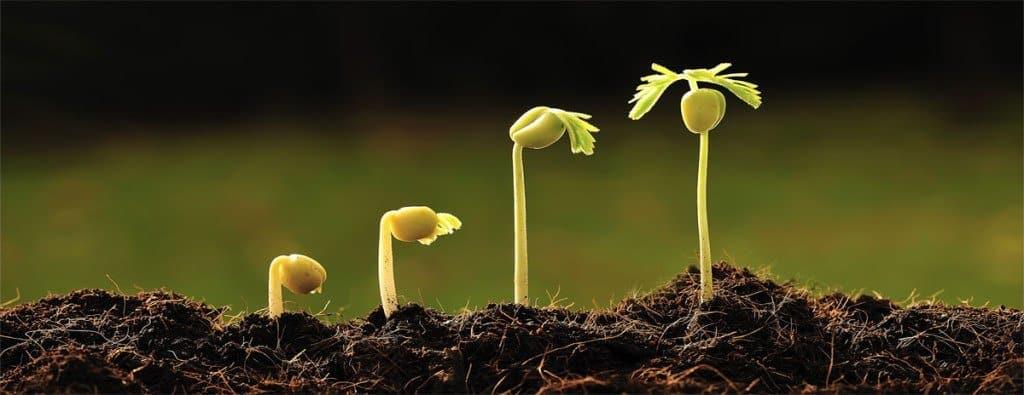 20170606 odette289135 id126669 imagen 3 - Flores y plantas para cada signo - hermandadblanca.org