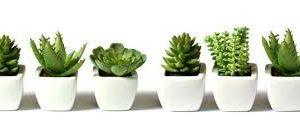 Naturaleza divina. Llena tu hogar de plantas para armonizar energías.