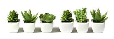 20170617 kikio327154 id127986 imagen 1 - Naturaleza divina. Llena tu hogar de plantas para armonizar energías. - hermandadblanca.org