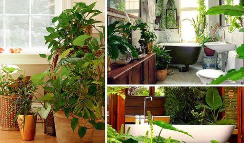 20170617 kikio327154 id127986 imagen 3 - Naturaleza divina. Llena tu hogar de plantas para armonizar energías. - hermandadblanca.org